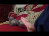 Спаринги : Нога и дагестанский кот с сломаными ушами))))